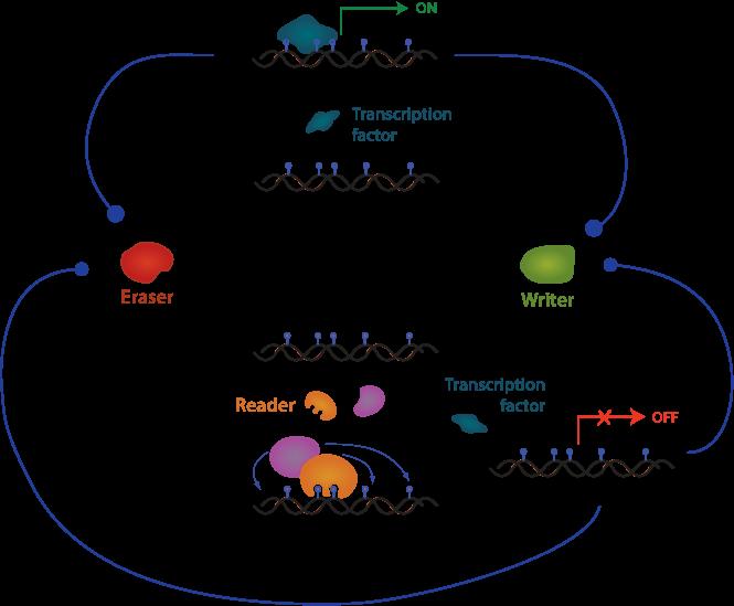 Epigenetics_Gio